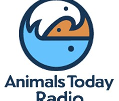 Animals Today Promo 1