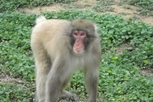 Animals Today June 16, 2018. The amazing Born Free USA Primate Sanctuary. Remembering Leona Helmsley's dog, Trouble and other more serious estate planning concerns. Interior department proposes a cruel rule change in Alaska – now is time to act! Our pet peeves about pet owners.