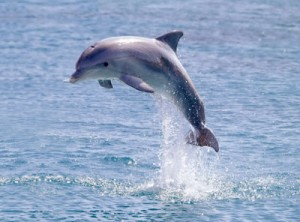 We like our dolphins wild and free.
