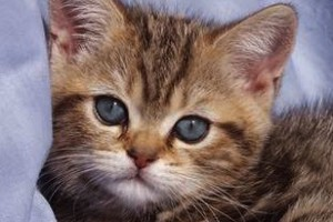 Animals Today – May 13, 2012. Dr. Marty Becker-  Your Cat: An Owner's Manual, and Pet Product Reviews