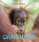 orangutan_thumb
