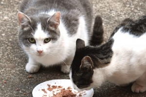 Animals Today – September 22, 2013 – Becky Robinson talks Feral Cats and, why do we oppose rodeos?