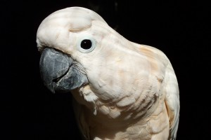 Animals Today November 24, 2013 – The film Parrot Confidential with Allison Argo and Karen Windsor