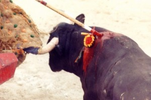 Animals Today –  July 13, 2014. The cruelty of bullfighting.  Pet Peeves.