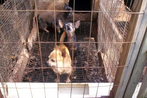 Animals Today – September 21, 2014. Legal challenge to the Phoenix ban on the sale of dogs and cats. Perspectives on breeding and dog overpopulation. Pet store success with humane business practices.