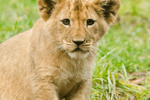 Animals Today November 14, 2015: Captive breeding and canned hunting of Lions: The film, Blood Lions. Popular dog names. Horses helping veterans.