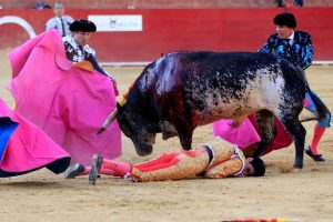 Animals Today July 16, 2016: Spanish Bullfighter killed on live TV. Coral Reef Awareness Week. What a Fish Knows, by Jonathan Balcombe. The first US animal shelter.