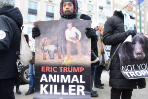 Animals Today March 10, 2018: The California Cruelty Free Cosmetics Act, and other hot news stories.  Opponents of African trophy hunting protest in front of apartment of Eric Trump. Snakebites and dogs. Learn about butterflies.