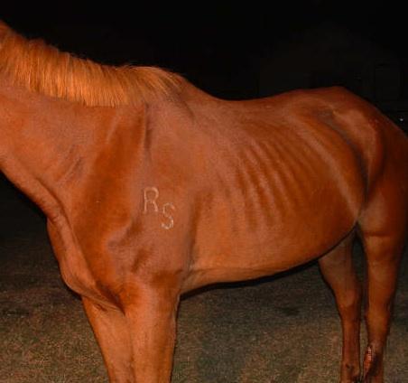 Meth in horse racing.
