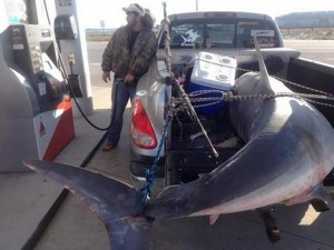 "805 lb. shark caught, killed and fried by men who only fish ""ethically."""