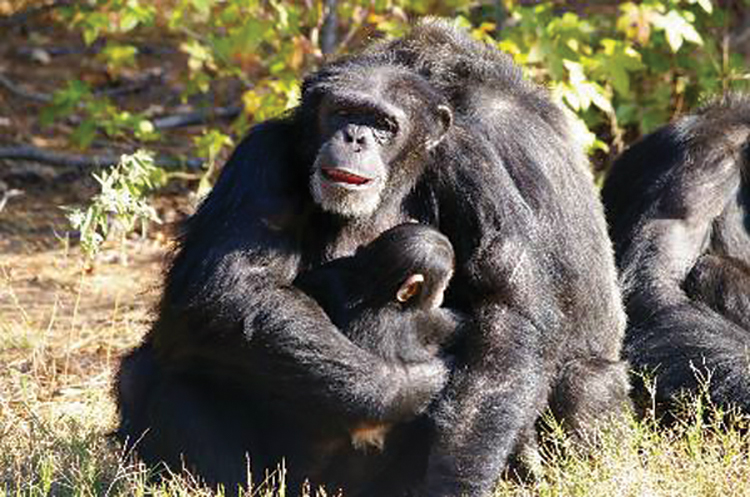 Tracy and Aunt Sara. Photo: Chimp Haven