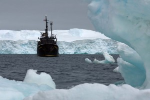 Farley Mowat amid icebergs. Photo: Sea Shepherd Conservation Society.