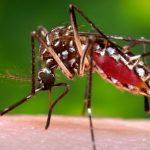 stopmosquitoes_456px