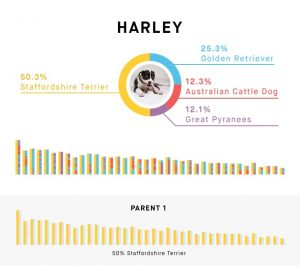 Genetic test result from Embark.
