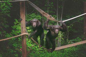 Animals Today Radio -