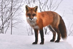 China protects wild animals. Faux or fur? Rodenticides.