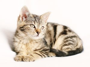 Pain creams used by people pose severe risks to cats.