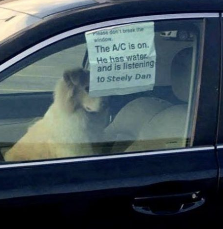 What to do if you see a dog in a hot car.