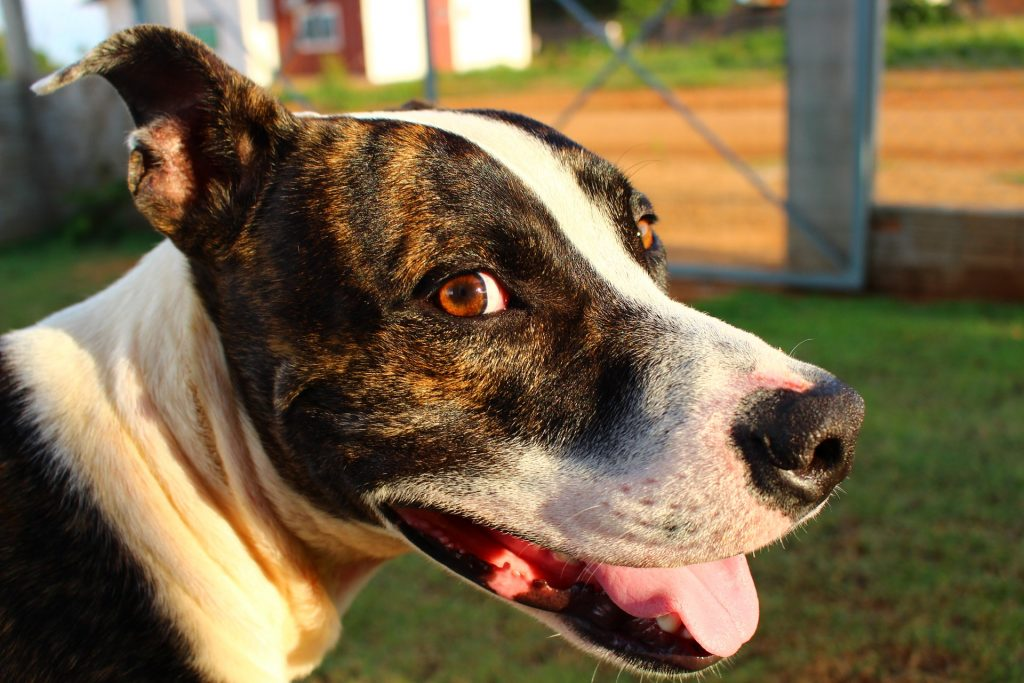 Alternatives to Breed-Specific Legislation
