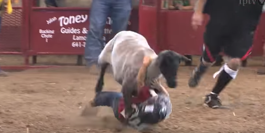 Why is Mutton Busting bad?