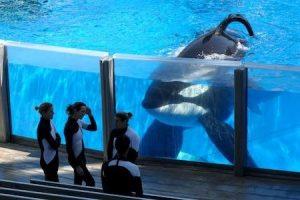 Killer whales in captivity