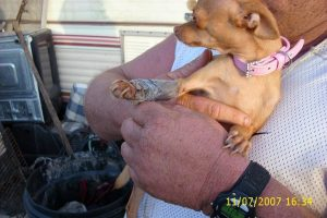 Preventing Animal Cruelty and Torture Act