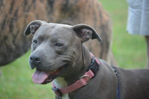 Why was breed-specific legislation created?