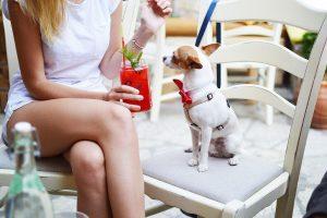 consider taking a pet sitter job
