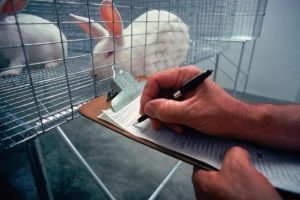 What is the difference between animal rights and welfare?