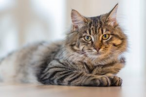 Is a vegan diet healthy for cats?