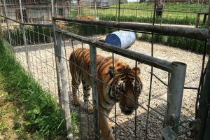Rights of animals in captivity