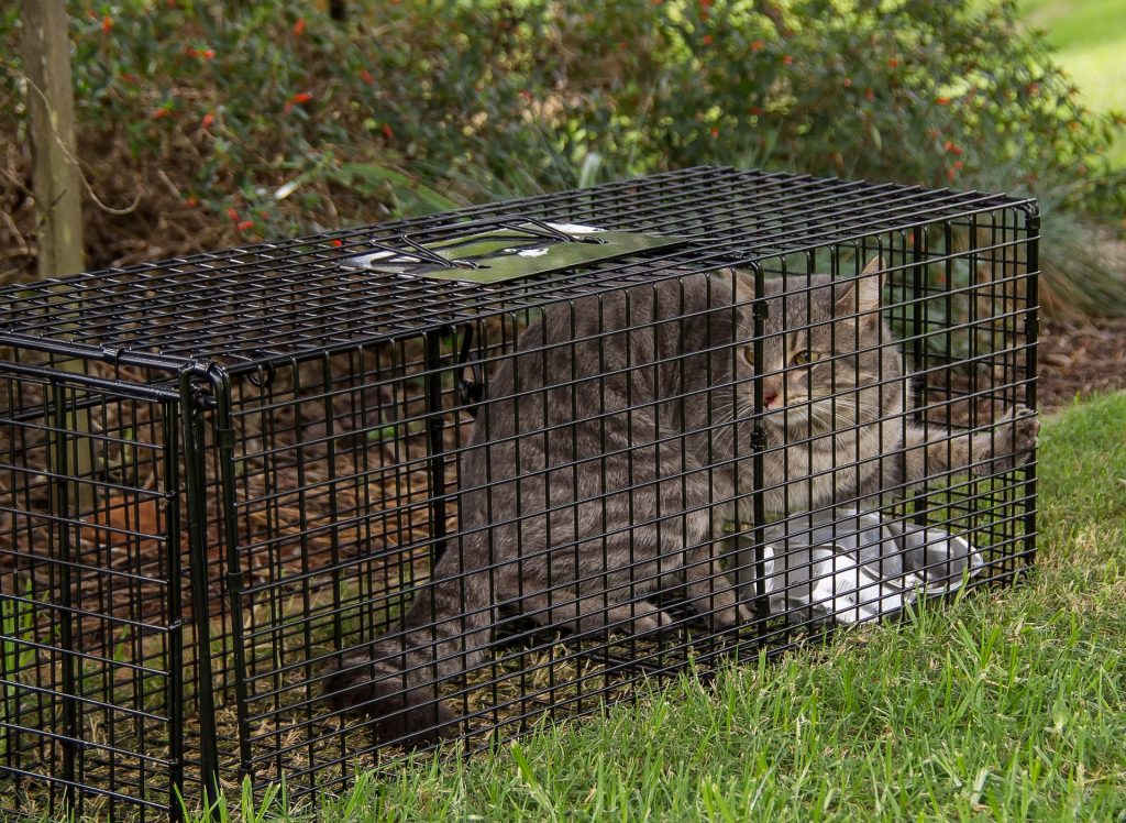 Trap neuter and release programs for feral cats