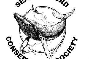What is Sea Shepherd doing now