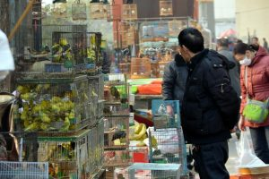 China has banned the trade and consumption of wild animals