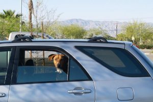 The dangers of leaving dogs in hot cars