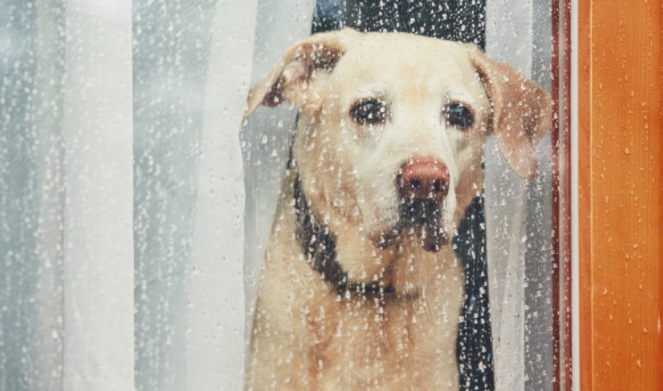 Easing pet anxiety and stress