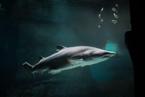 What Are Some Interesting Facts About Sharks