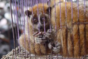American live animal markets under scrutiny