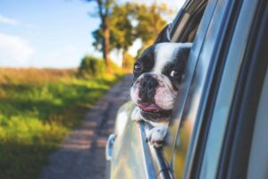 Dogs cannot be left in cars alone