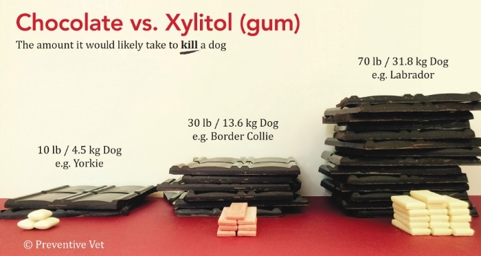 Is xylitol toxic to dogs?